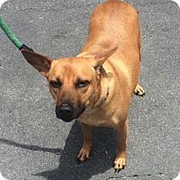 Adopt A Pet :: Cleo - Jupiter, FL