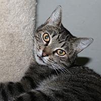 Adopt A Pet :: Catalina - Santa Rosa, CA