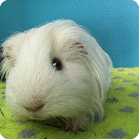 Adopt A Pet :: Jammer - Coral Springs, FL