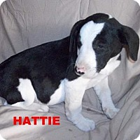 Adopt A Pet :: Hatti - Silverdale, WA