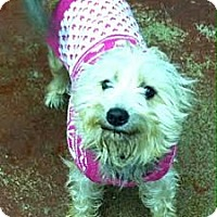 Adopt A Pet :: Missy~Adopted! - Troy, OH
