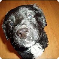 Adopt A Pet :: Slate-adoption pending - Glastonbury, CT