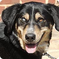 Adopt A Pet :: Bella - Kittery, ME