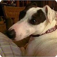 Adopt A Pet :: Dixie in Houston - Houston, TX