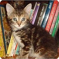 Adopt A Pet :: Giada - Orlando, FL