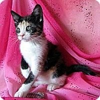 Adopt A Pet :: Leilani - Orlando, FL