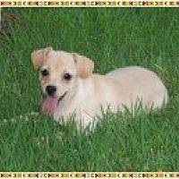 Adopt A Pet :: Dougy - Colton, CA