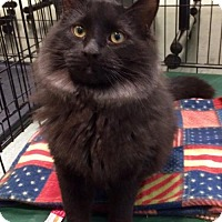 Adopt A Pet :: Buddy - Northeast, OH