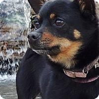 Adopt A Pet :: Tess - Joplin, MO