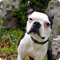 Adopt A Pet :: Banana - Los Angeles, CA
