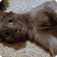 Adopt A Pet :: Irina - Sweet 'n Gentle Teen - HILLSBORO, OR