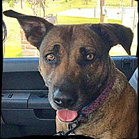 Adopt A Pet :: BB - Bastrop, TX