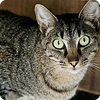 Adopt A Pet :: Alexander - Jackson, MS