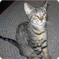 Adopt A Pet :: Alex - Jenkintown, PA