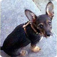 Adopt A Pet :: CHICO - dewey, AZ