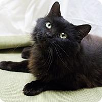Adopt A Pet :: Elvira - Chicago, IL