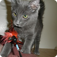 Adopt A Pet :: Steven - Milwaukee, WI