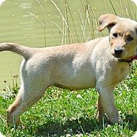 Adopt A Pet :: Millow - Pleasant Plain, OH