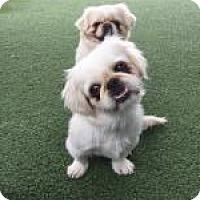 Adopt A Pet :: Moby - Van Nuys, CA