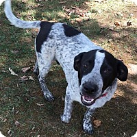 Adopt A Pet :: Spot - Ball Ground, GA