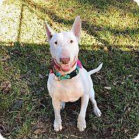 Adopt A Pet :: Peggy Sue - Houston, TX