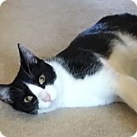 Adopt A Pet :: Martin - Jackson, NJ