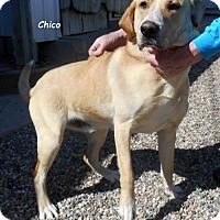 Adopt A Pet :: Chico - Oskaloosa, IA