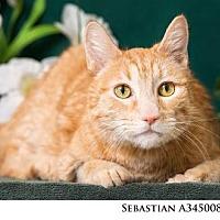 Adopt A Pet :: SEBASTIAN - Reno, NV