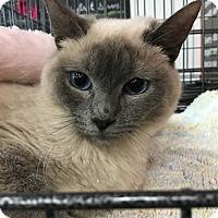 Adopt A Pet :: Lola - Cerritos, CA