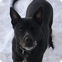 Adopt A Pet :: Jonah - Foristell, MO