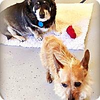 Adopt A Pet :: Harley and Marley -Bonded Pair - Tijeras, NM