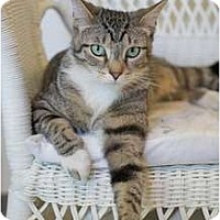 Adopt A Pet :: Alie - Victor, NY