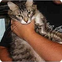 Adopt A Pet :: Precious - Owasso, OK