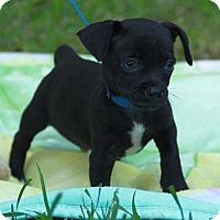 Adopt A Pet :: Mighty Moe - Staunton, VA