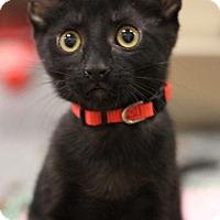 Adopt A Pet :: Buck - Sacramento, CA