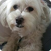 Adopt A Pet :: Elvis - Ocean Ridge, FL