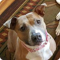 Adopt A Pet :: Karma - Brooklyn Center, MN