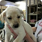 Adopt A Pet :: 'Irish Puppies' Clover (Has Application)
