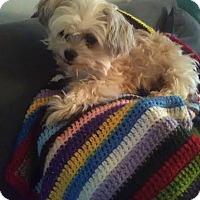 Adopt A Pet :: Bitzi - Columbus, OH