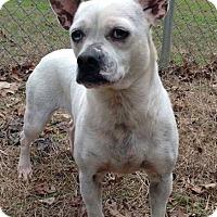 Adopt A Pet :: Hannah - Homewood, AL