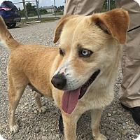 Adopt A Pet :: Lilly meet me 6/2 - Manchester, CT