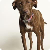 Adopt A Pet :: Remi - Baton Rouge, LA