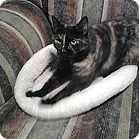 Adopt A Pet :: Penny - Modesto, CA