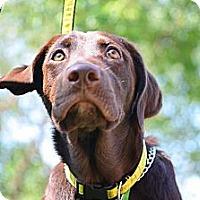 Adopt A Pet :: Ashton - Cumming, GA