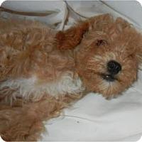 Adopt A Pet :: Pryce - Antioch, IL
