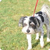 Adopt A Pet :: Chicago Joe - Tumwater, WA