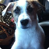 Adopt A Pet :: Mosey PENDING - Houston, TX