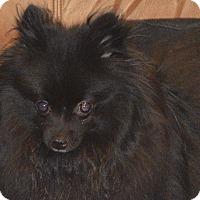 Adopt A Pet :: TJ - Prole, IA
