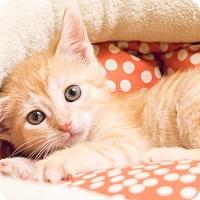 Adopt A Pet :: Yamaha - Chicago, IL