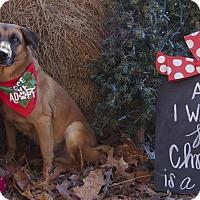 Adopt A Pet :: Oscar - Bishopville, SC